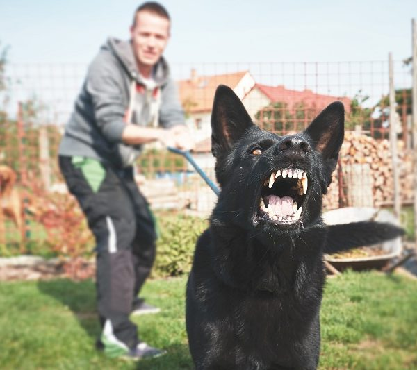 Aggressive dogs can cause serious injury | Findlay Personal Injury Lawyers